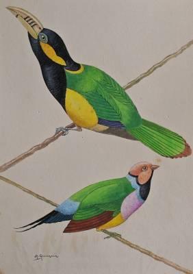Arthur Gouverneur, oiseaux