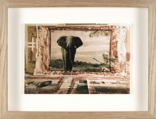 Peter Beard, Elephant, photographie